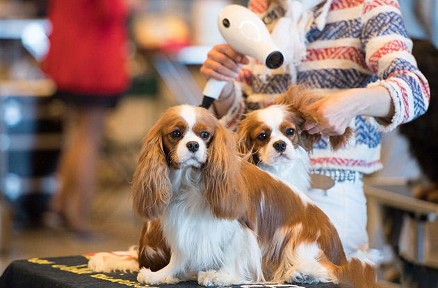 The American Kennel Club and Westminster Club to Host Meet and Greet in February