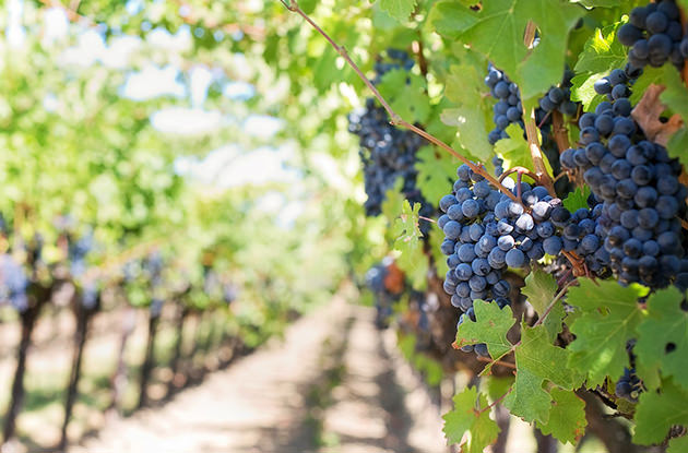 Kid-Friendly Wineries on Long Island