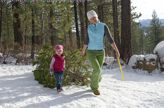 Where to Cut Your Own Christmas Tree in the New York Area