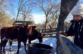 Stamford Museum & Nature Center: A Day of Fun, Indoors and Outdoors