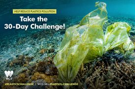 Wildlife Conservation Society Launches 30-Day Plastics Challenge