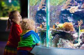 Free Aquariums, Museums, Zoos, and Gardens with Suggested Donations
