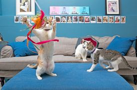 Cat Cafés in New York City