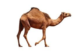 Long Island Game Farm Hosts Camel Naming Party