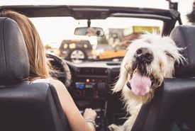 5 Things You Need to Know About Traveling With Your Pet