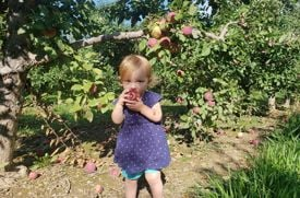 10 Tips for Apple Picking