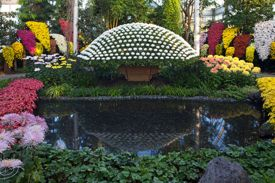 Kiku: The Art of the Japanese Garden Returns to New York Botanical Garden