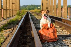 Best Practices for Traveling with Pets