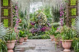 The Orchid Show at the New York Botanical Garden is Open