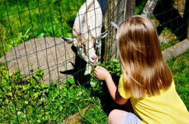 Summer Camps That Offer Nature and Petting Zoo Programs for Campers on Long Island