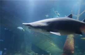 Long Island Aquarium to Host 'Shark Tag Event' for Shark Conservation on May 17