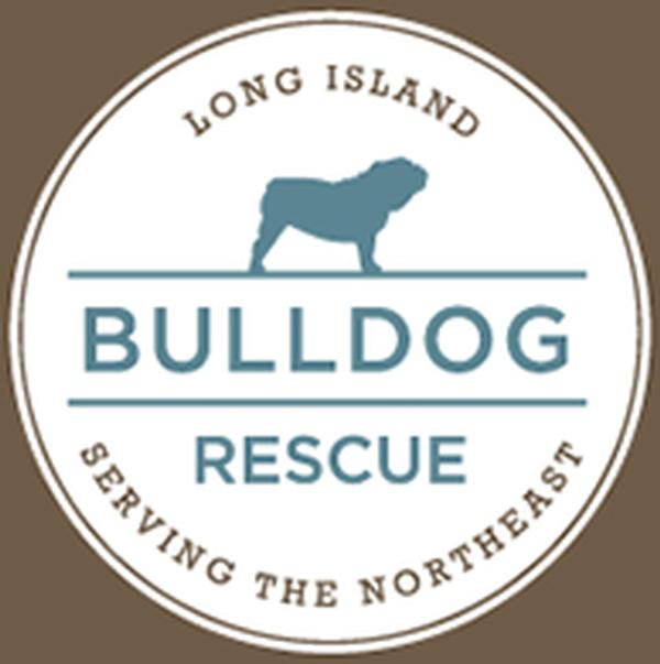 Coco & Friend Presents Long Island Bulldog Rescue's Bash for the Bulldogs at Rosenthal Pavilion