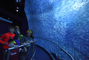 National Geographic Encounter: Ocean Odyssey Photos