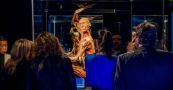 Body Worlds: Pulse Photos
