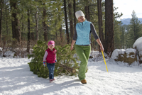 Cut Your Own Christmas Tree Long Island.Where To Cut Your Own Christmas Tree New York New Jersey