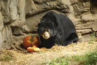 Boo at the Zoo, Queens Zoo