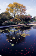 Leaf-Peeping party at Brooklyn Botanic Garden
