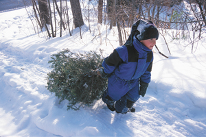 Where to cut your own christmas tree, ny, nj, ct, long island