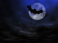 Bat, creatures of the night, Halloween