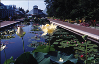 Lily Pool Terrace at Brooklyn Botanic Garden. Photo by Helena Fierlinger.