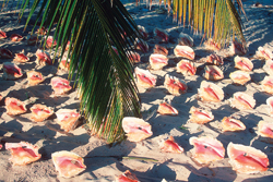 conch; turks and caicos; caribbean vacation; beach