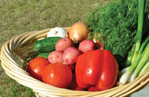 farm markets in Rockland County; fresh produce; vegetables