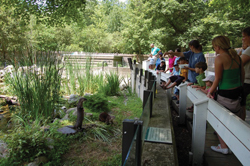 otters; zoo; stamford museum and nature center