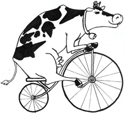 cow on a bicycle; animal riding a bike