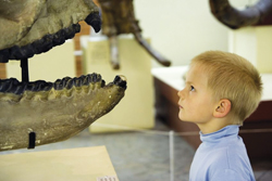 little boy looking at dinosaur bones in a museum