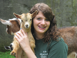 A girl holds a baby goat at the Yorktown Grange Fair; girl holding baby cow