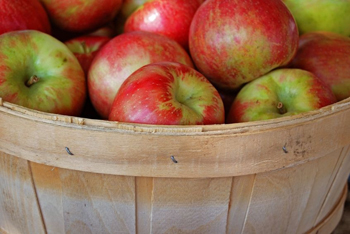 bushel of red apples; red apples picked from an orchard; pick your own apple farms in southeast, central, and upstate new york