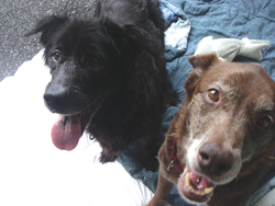 Putnam Humane Society; Java and Mocha; dogs at animal shelter; senior dogs