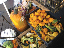 pumpkins and other fall gourds