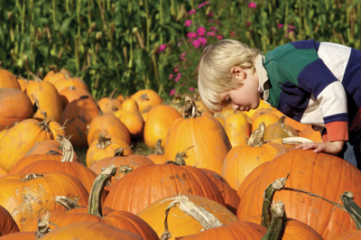 young boy picking a pumpkin; kid in a pumpkin patch