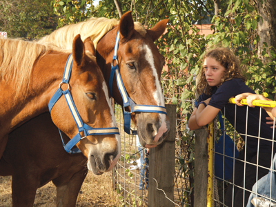 Wildlife Weekends at Queens County Farm Musuem; horses at the zoo