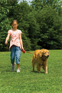 dog obedience classes; girl walking golden retriever in park