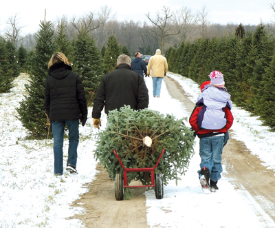 family carrying home a Christmas tree