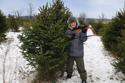 boy cutting down a Christmas tree, evergreen, pine tree