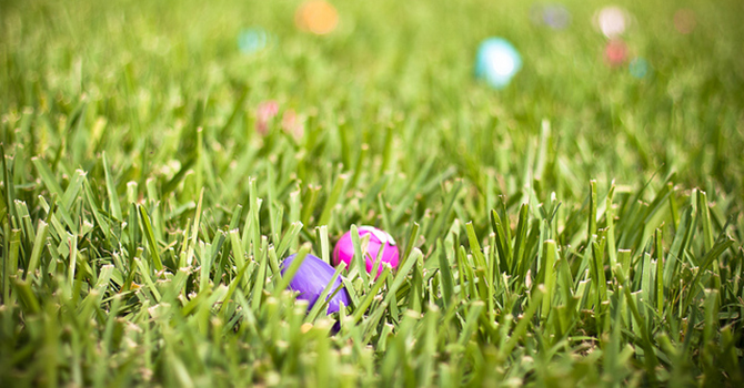 easter-eggs-in-field