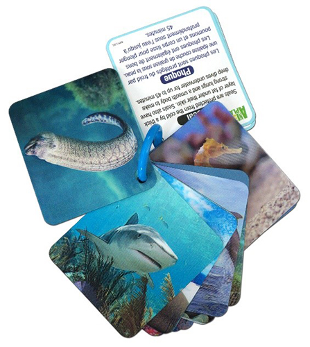 animal planet 3-d flash cards