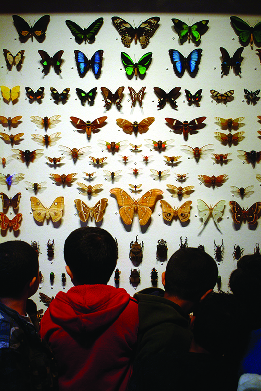 Butterfly exhibit at Staten Island Museum