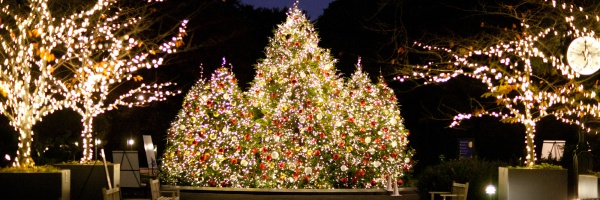 new york botanical christmas tree