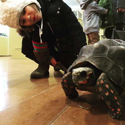 Heckscher Wild reptile house at Stamford Museum and Nature Center