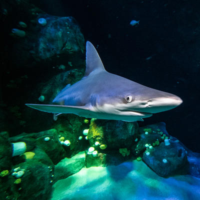 reef shark new york aquarium