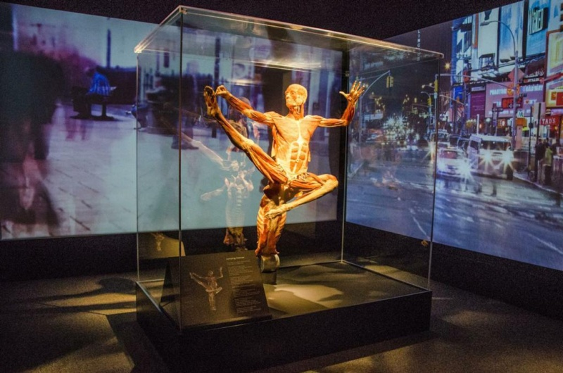 body worlds times square