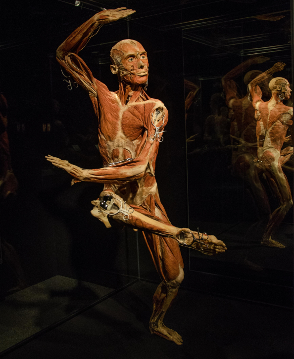 body worlds times square karate