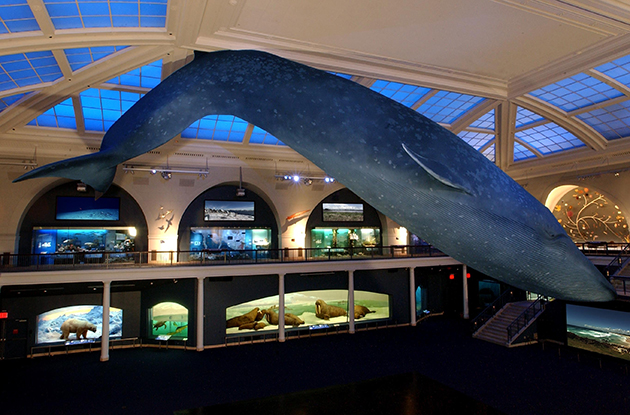 milstein hall of ocean life american museum of natural history