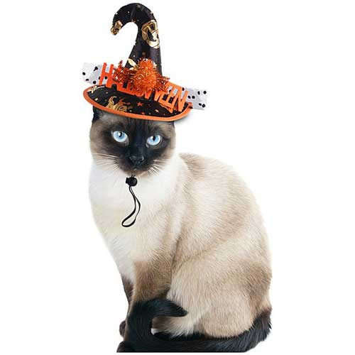 witch hat for pets halloween costume