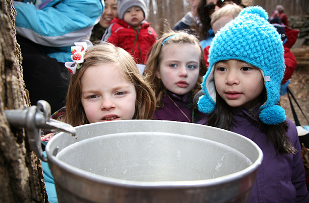 maple sugaring with kids