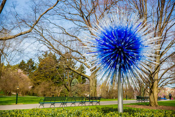 Chihuly, Sapphire Star, New York Botanical Garden